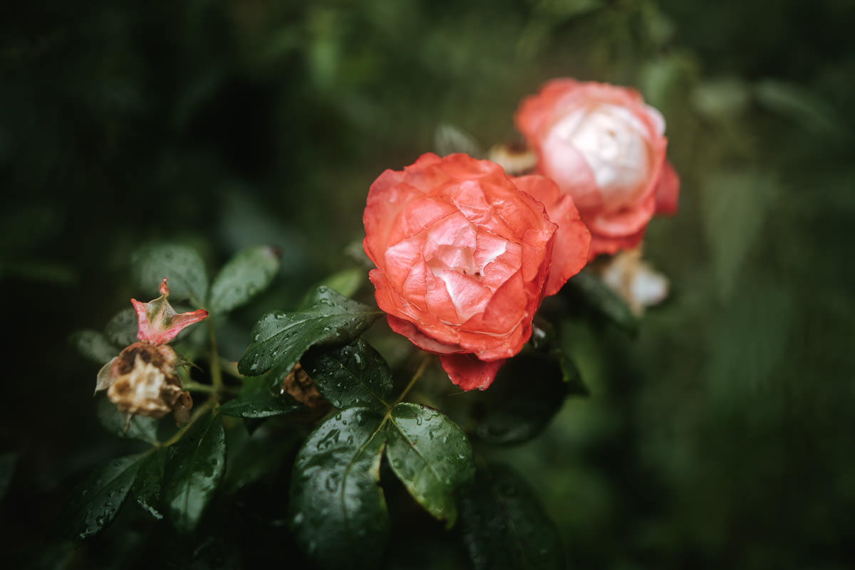 pembroke lodge wedding flowers