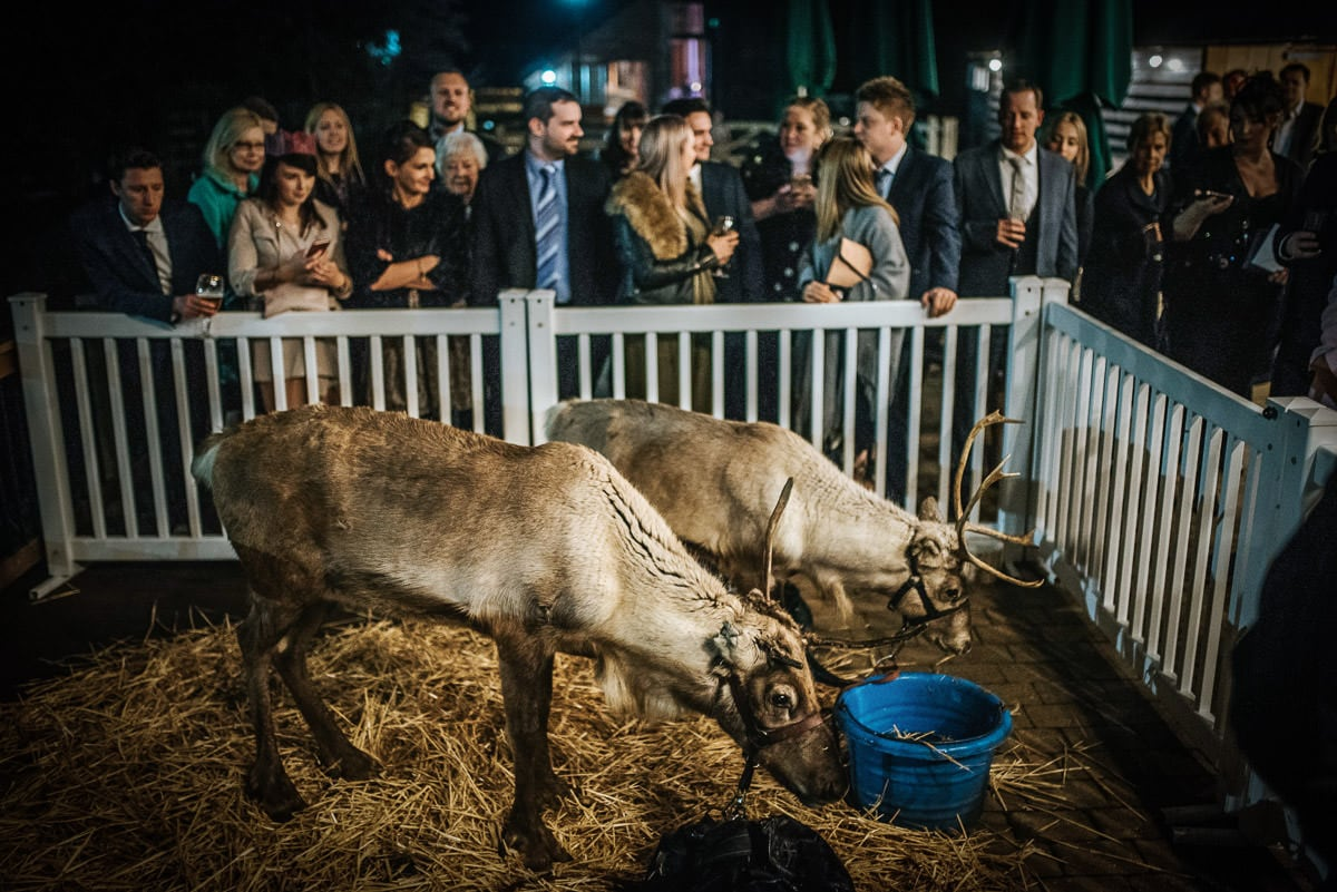 tewin bury farm wedding reindeers