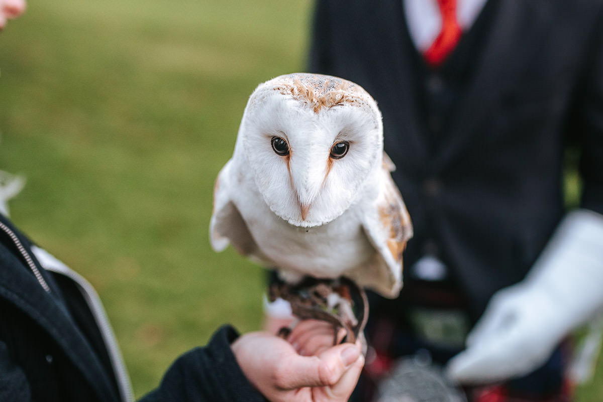 hedingham castle wedding owl