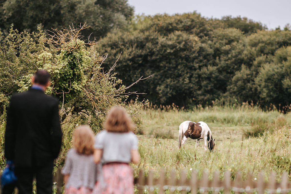 sopley mill wedding horse in the field